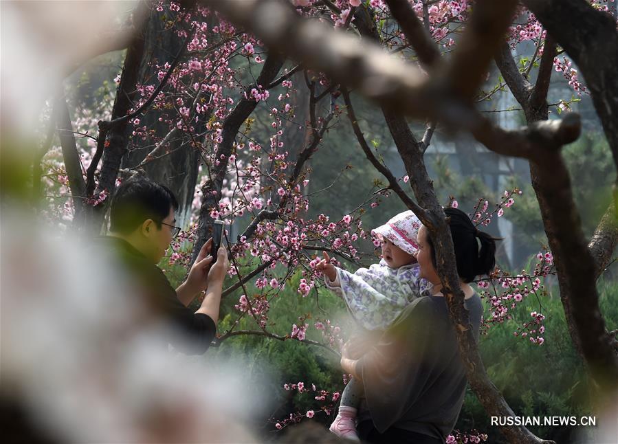 Очарование цветущего Пекина