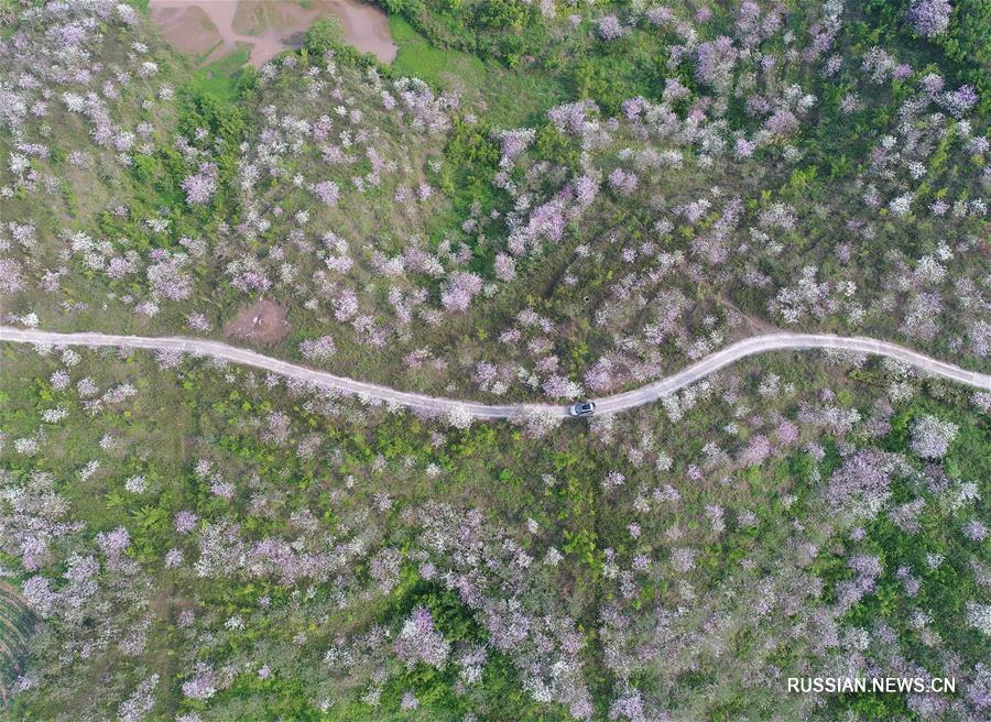 Цветущая деревня на юге Китая