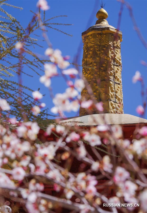 Цветущие персиковые деревья украсили монастырь Джэпун в Лхасе