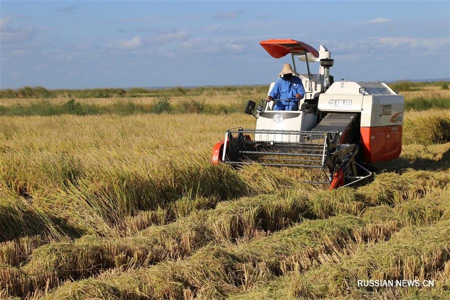 В созданном при поддержке Китая мозамбикском сельхозпарке началась уборка риса