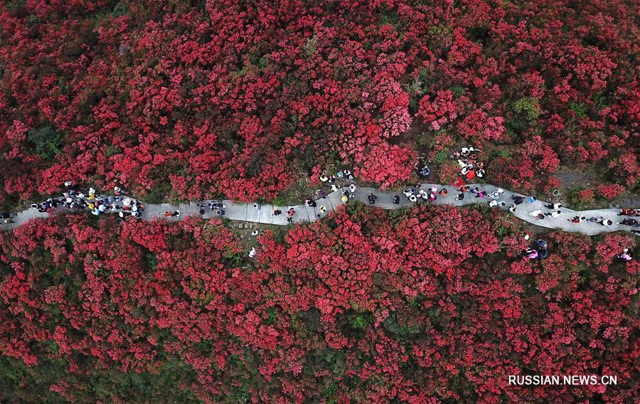 Китай утопает в весенних цветах