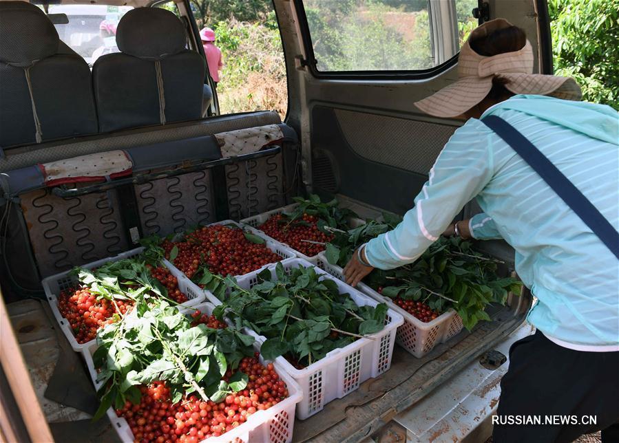 Развитие лесоводства и садоводства в поселке Чицзю