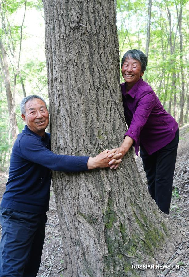 200 тыс деревьев, выращенных Чжан Ляньлянь