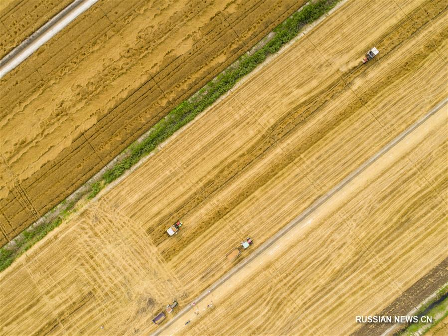 Два цвета на июньских полях Китая