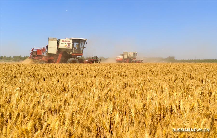 Масштабные сельскохозяйственные работы в провинции Хэбэй