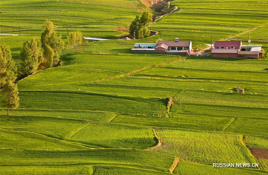 Летние поля у подножия гор Циляньшань
