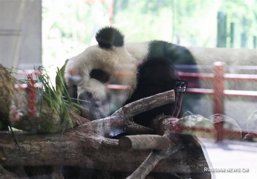 Китайские звезды Берлинского зоопарка