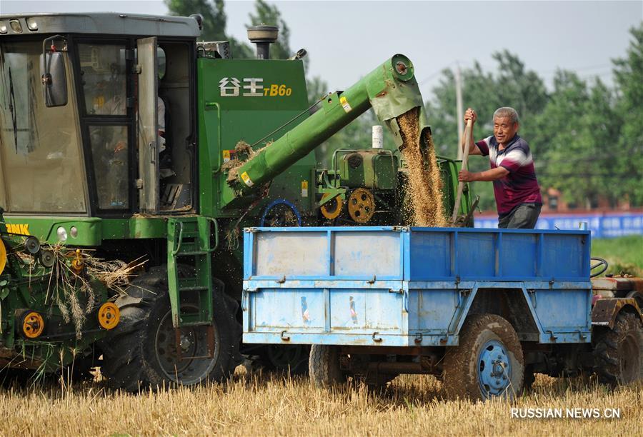 Фермеры собирают урожай пшеницы в провинции Хэбэй