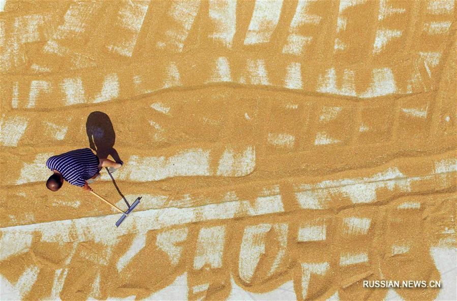 Фермеры сушат пшеницу в провинции Хэбэй
