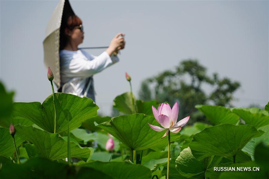 Длинный сезон любования цветами в районе Чанъань
