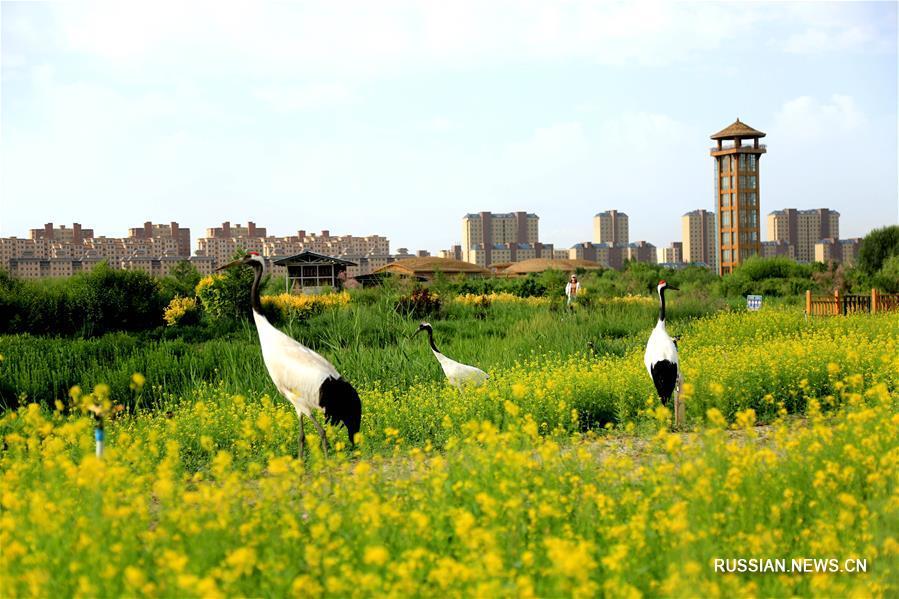 Китай занимает 4-е место в мире по площади водно-болотных угодий