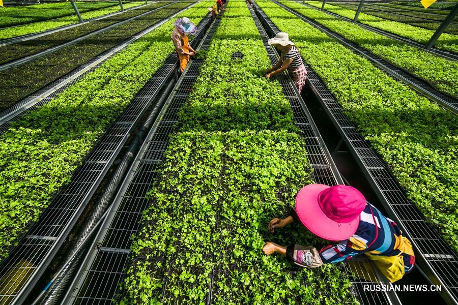 Выращивание рассады в провинции Гуйчжоу