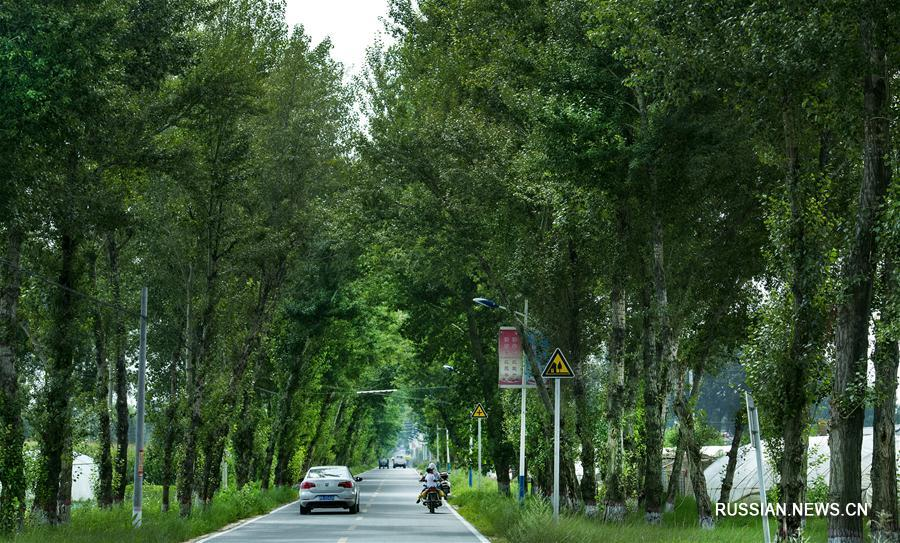 Городской округ Юйлинь в провинции Шэньси смог остановить опустынивание
