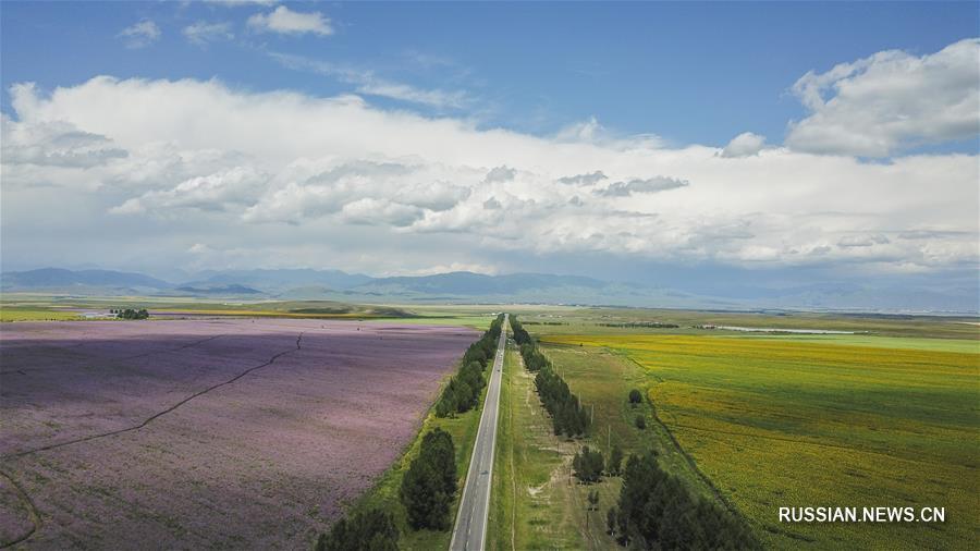 Автодороги Синьцзяна