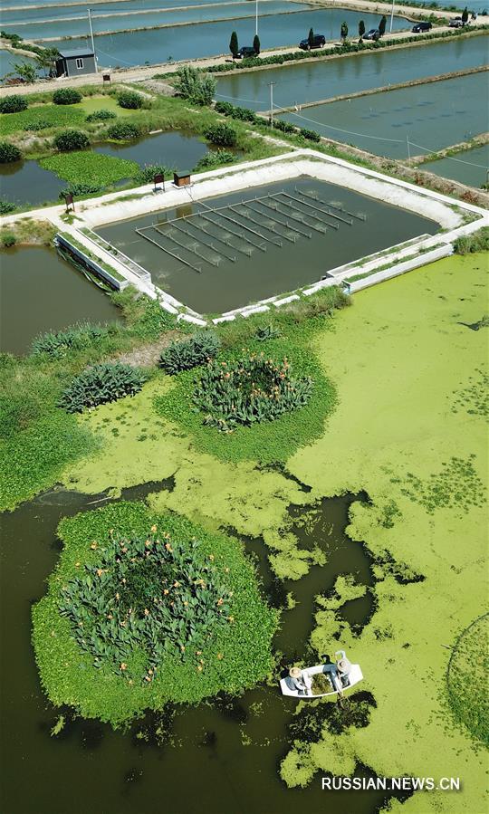 Проект биоочистки отработанных рыбоводных прудов в Хучжоу