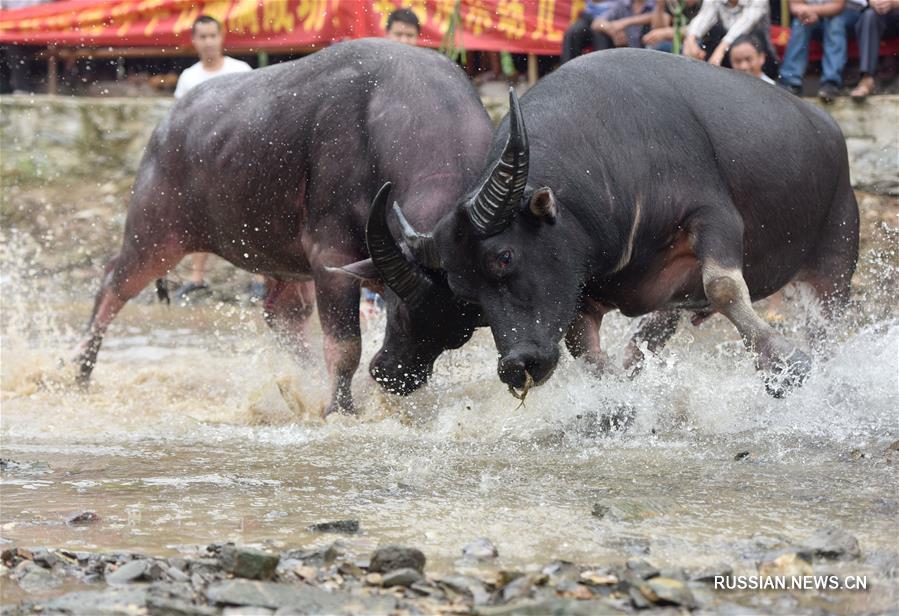 На юге Китая провели фольклорные мероприятия в честь богатого урожая