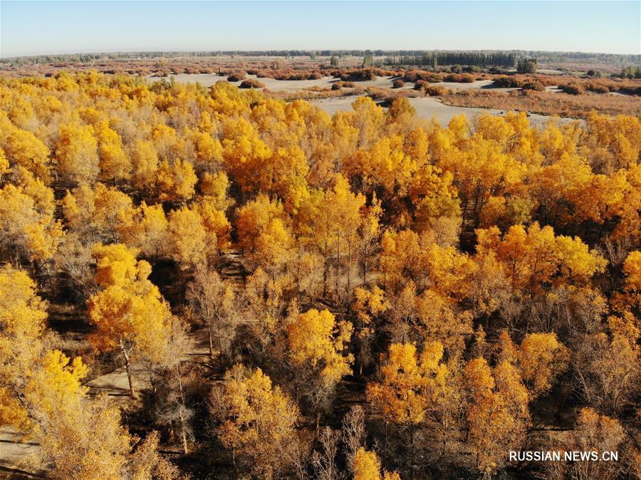 Красота осеннего леса в провинции Ганьсу