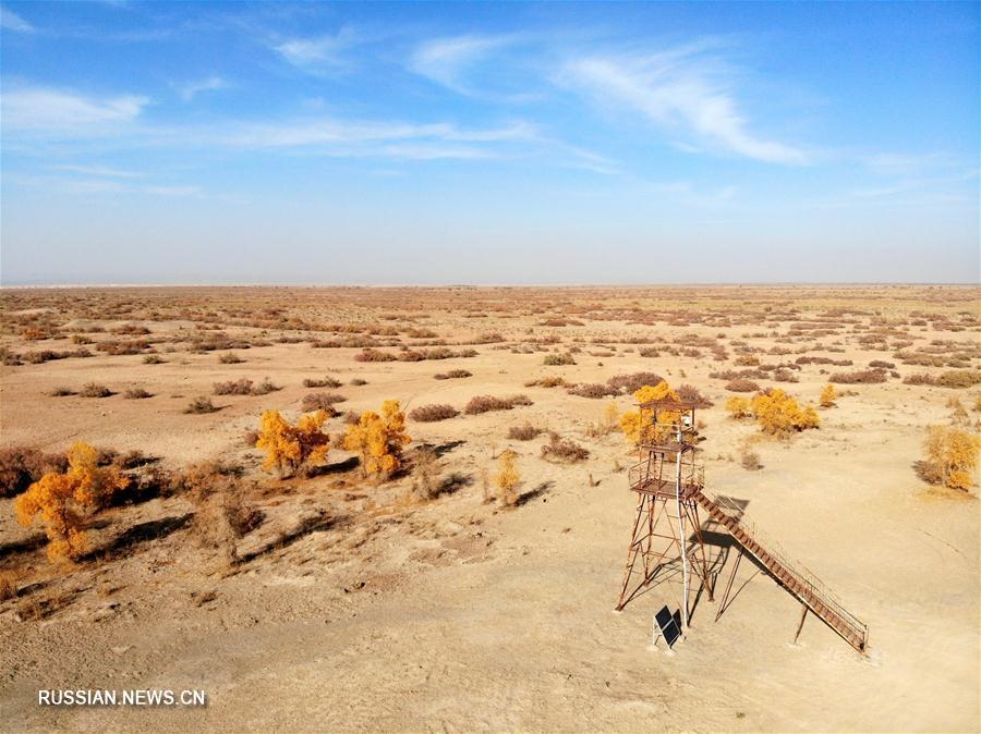 Тополиные рощи посреди пустынной местности на северо-западе Китая