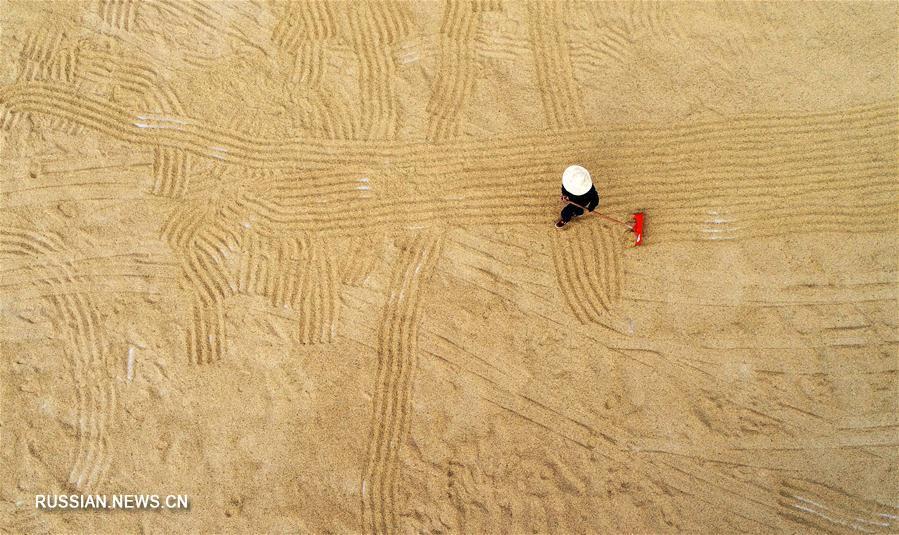 Сбор урожая в Китае на Всемирный день продовольствия -- 16 октября