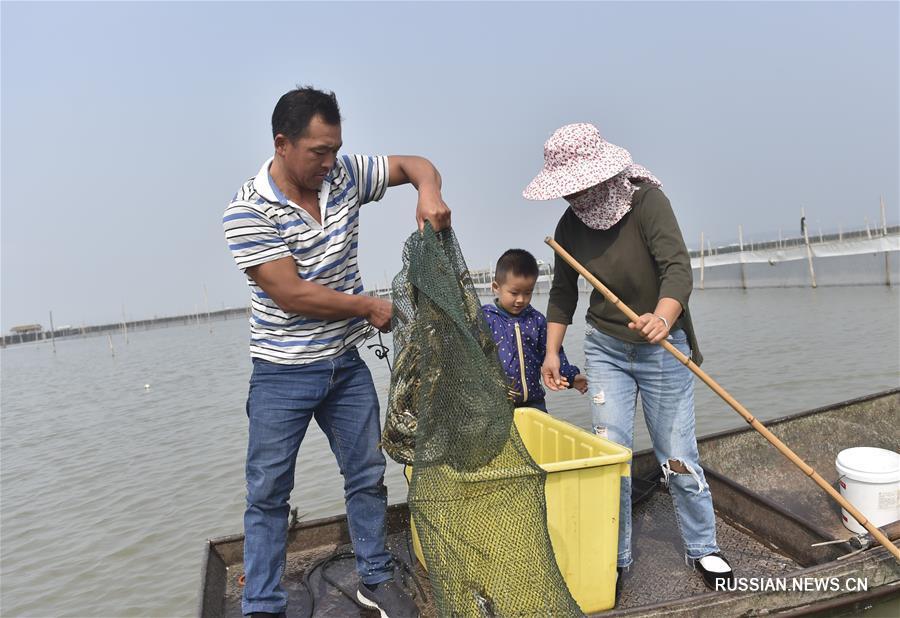 Сбор крабов на предприятиях в провинции Чжэцзян