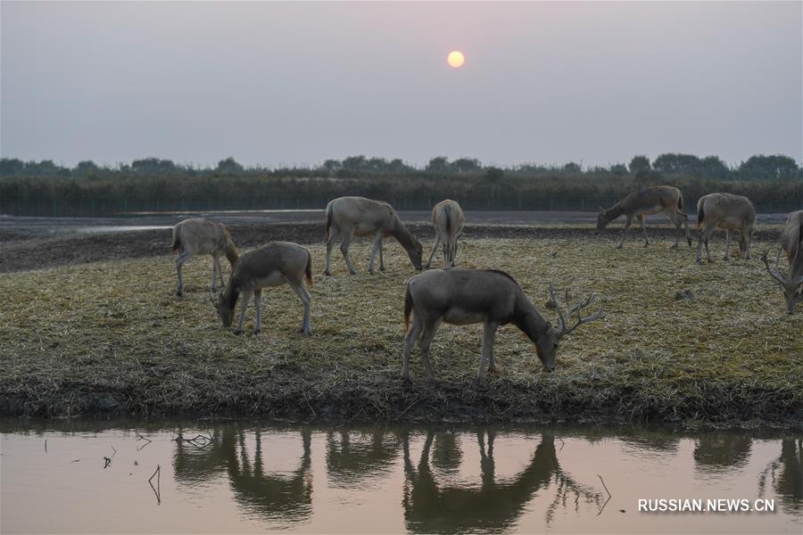 Национальный парк водно-болотных угодий Ханчжоувань в провинции Чжэцзян