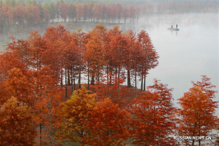 Осенние пейзажи в лесах уезда Сюйи провинции Цзянсу