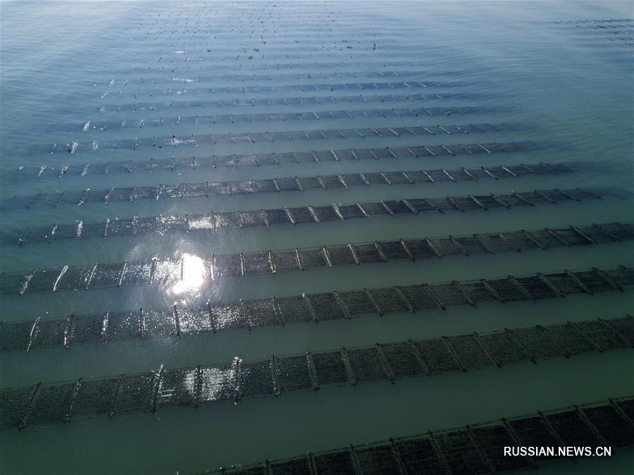 В провинции Фуцзянь начинается сезон сбора морских красных водорослей