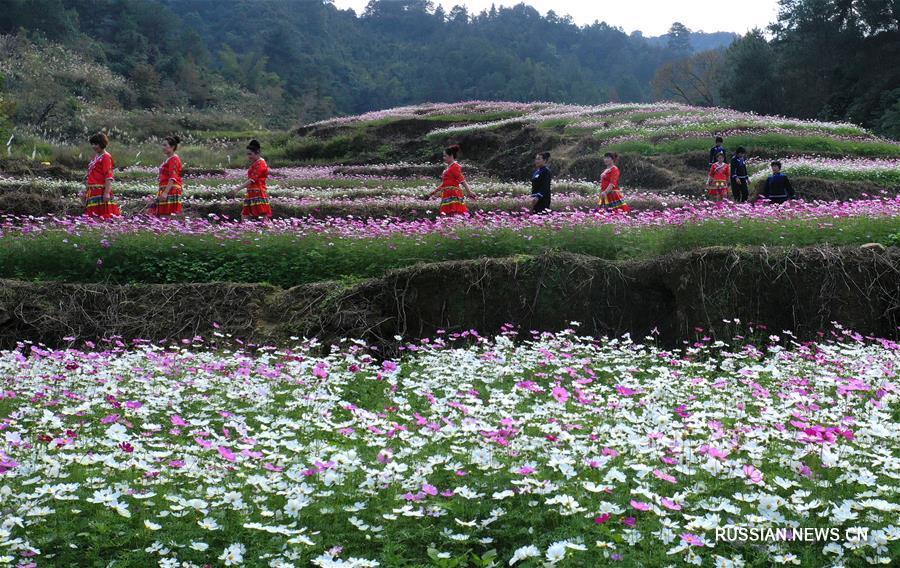 Цветущие поля в уезде Дэбао на юге Китая