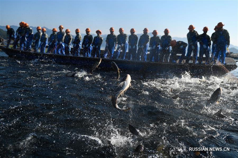 Лов рыбы большой сетью на озере Цяньдаоху