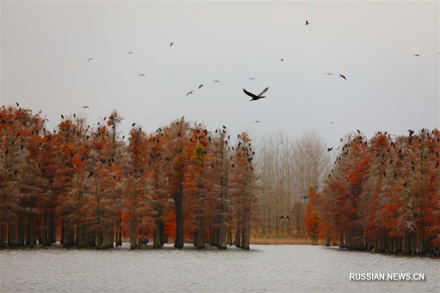 """Парк водно-болотных угодий """"Чишаньху"""" в уезде Лайань"""