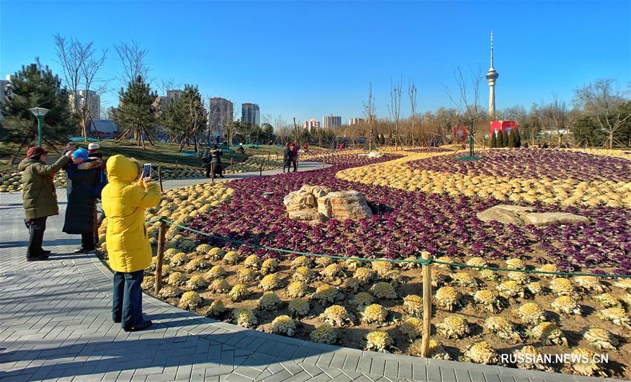 Зимние клумбы в оттенках золота и пурпура в столичном парке Юйюаньтань
