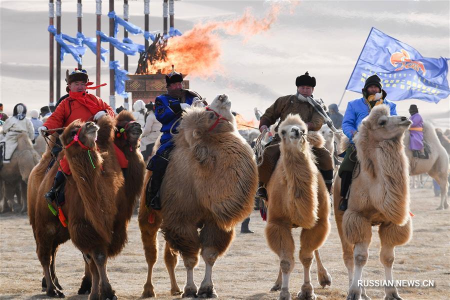 Во Внутренней Монголии начался фестиваль верблюдов