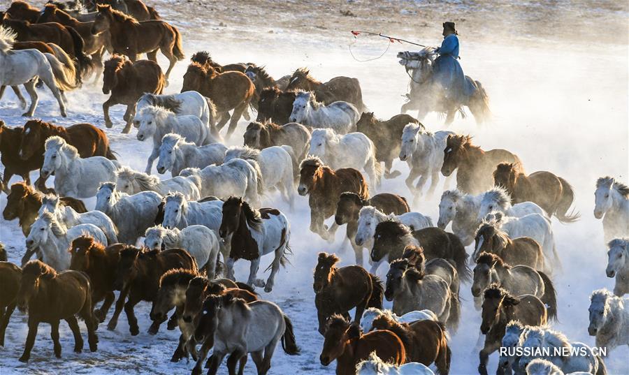 Табун лошадей, несущийся по заснеженной степи