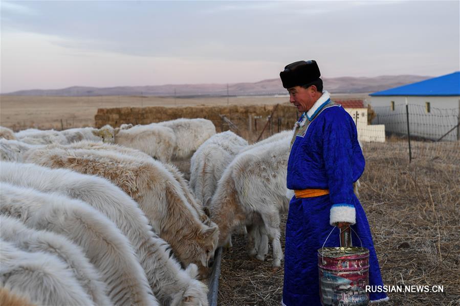 Традиционное вяленое мясо приносит дополнительных доход монгольским скотоводам