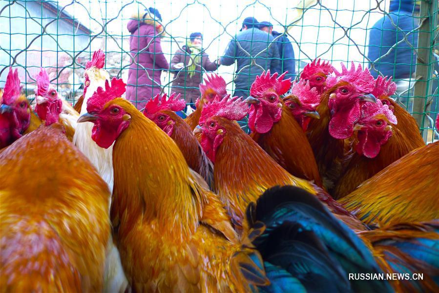 Жители Цзаочжуана покупают петухов к Празднику весны