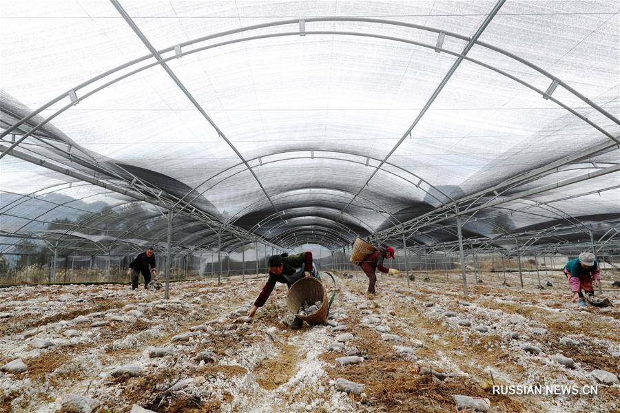 Сельскохозяйственные работы после праздника Весны
