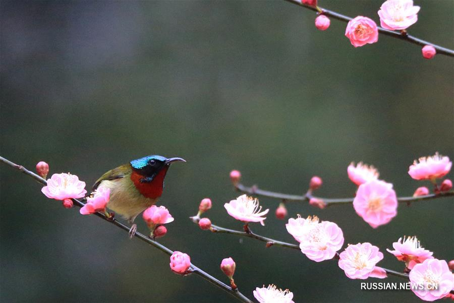 Птицы в кронах цветущих деревьев