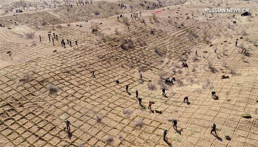 Борьба с опустыниванием в уезде Линьцзэ