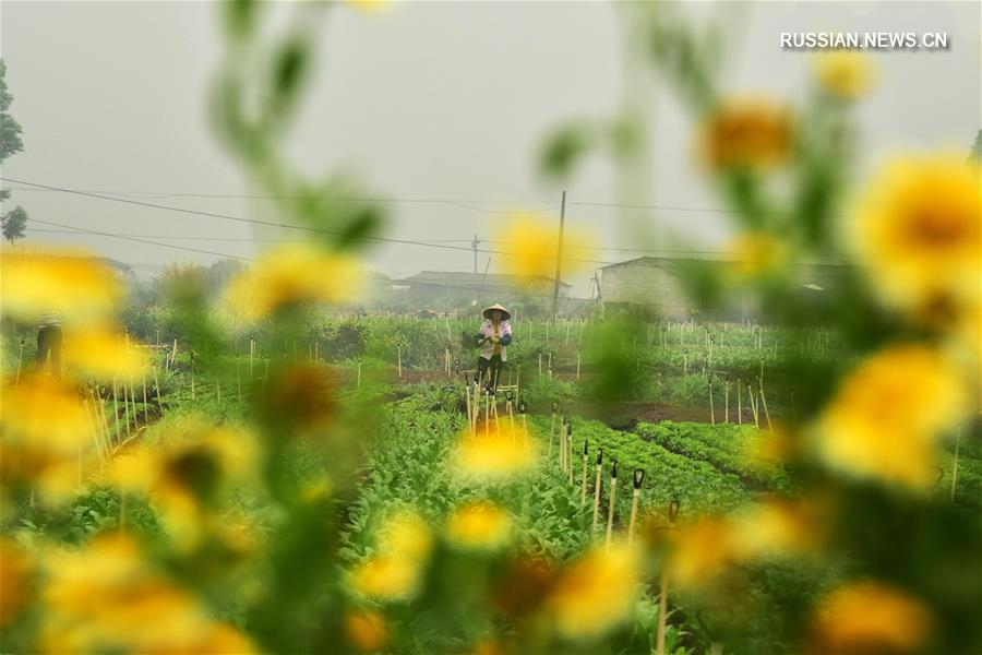 Весенние заботы китайских фермеров