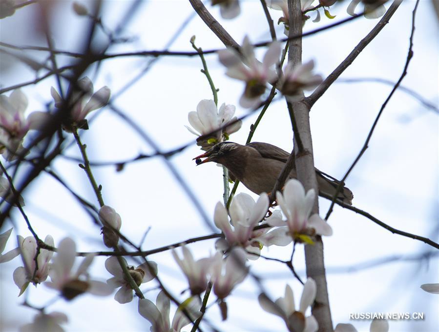 Птицы и цветы в весеннем Шанхае