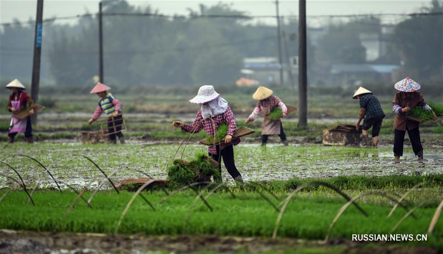 Полевые работы китайских крестьян за день до весеннего равноденствия
