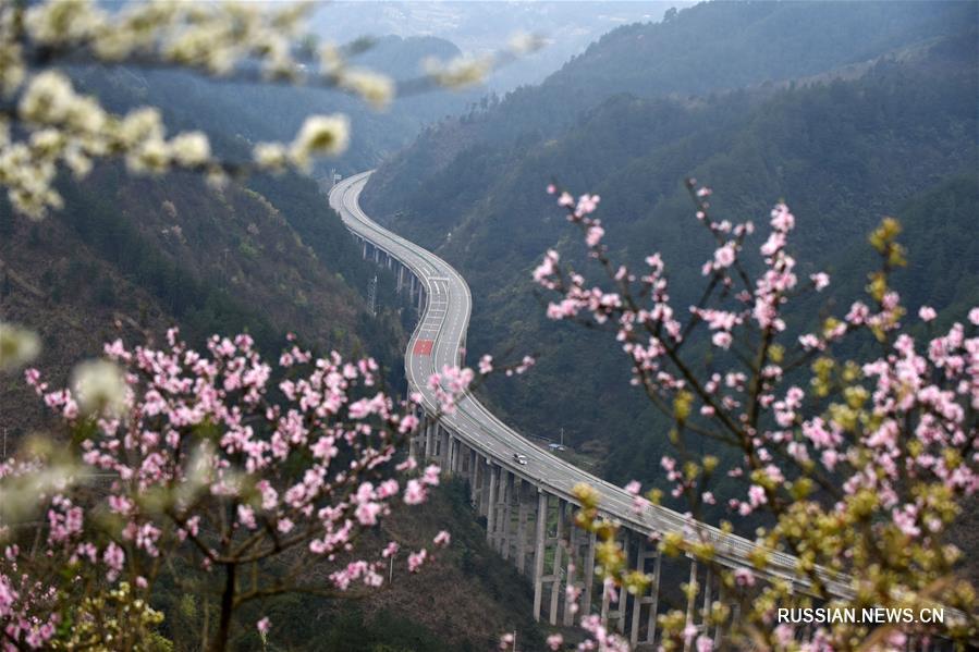Цветение персиков и груш у скоростного шоссе в провинции Гуйчжоу