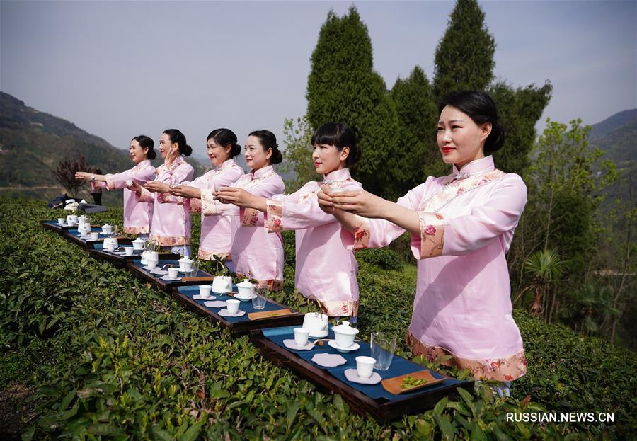 Весенняя культурно-туристическая программа на чайных плантациях уезда Цзыян