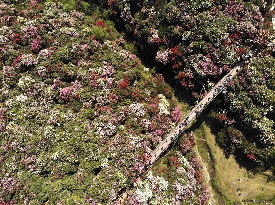 Жители Поднебесной любуются цветущей весенней природой