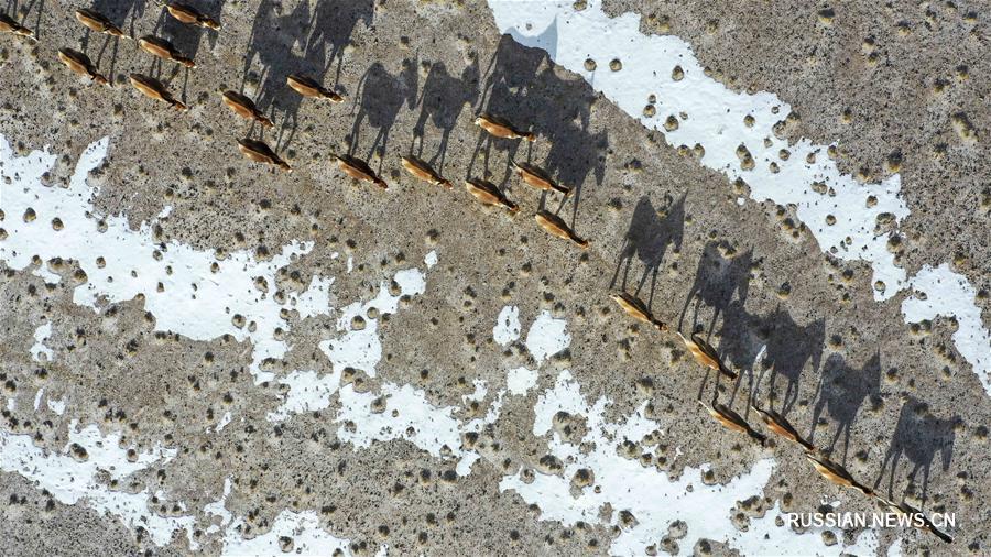 Возрождение уникальной природы заповедника Алтыншань в Синьцзяне