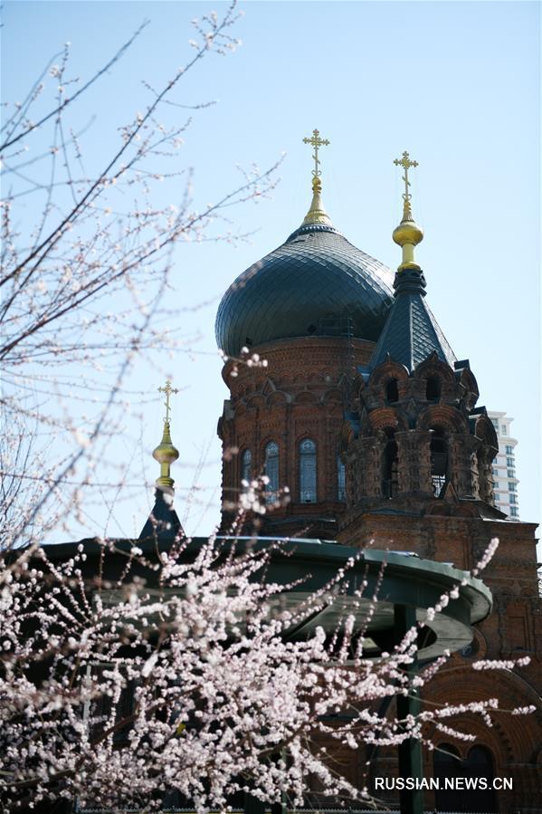 Весеннее очарование Софийского собора в Харбине