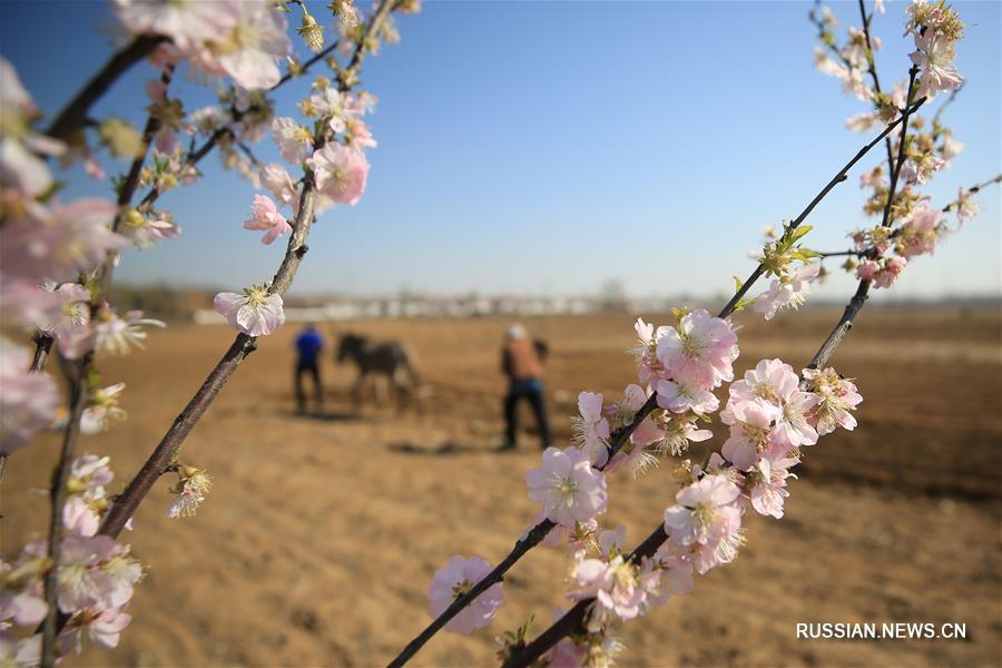 Заботы фермеров в апреле