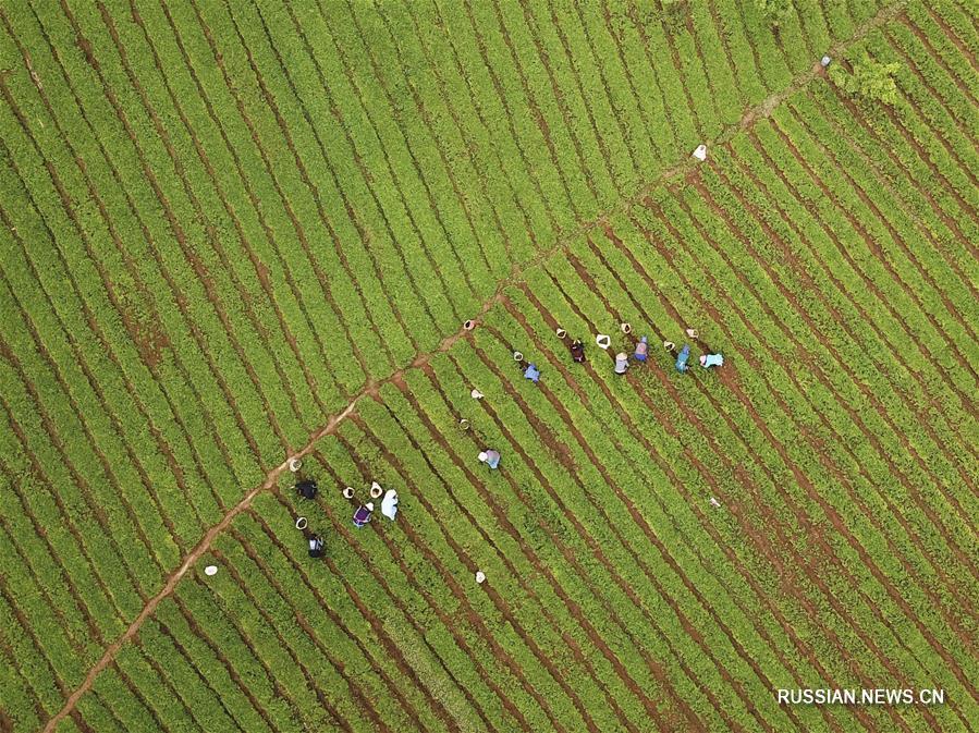 Сельхозработы конца весны
