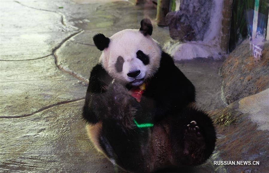 Индивидуальные способы спасения от зноя для обитателей хайнаньского зоопарка