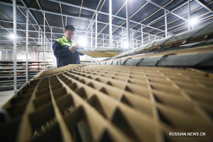 Разведение тутового шелкопряда в провинции Гуйчжоу
